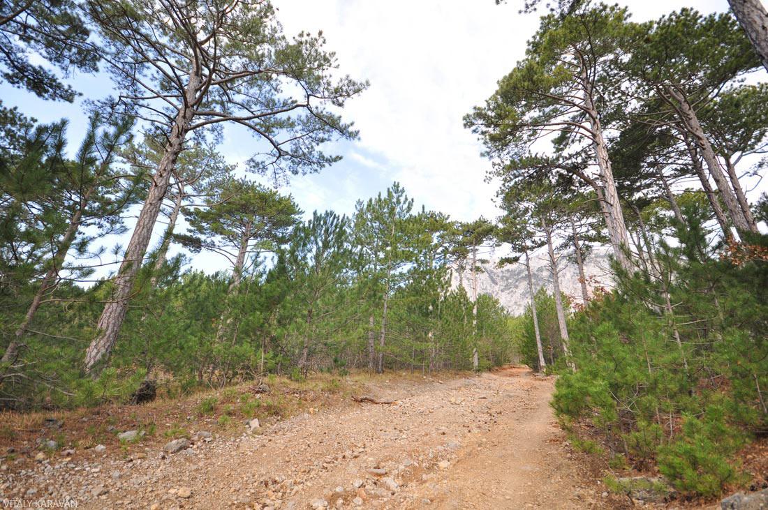 лесная дорога на гору Ай-Петри