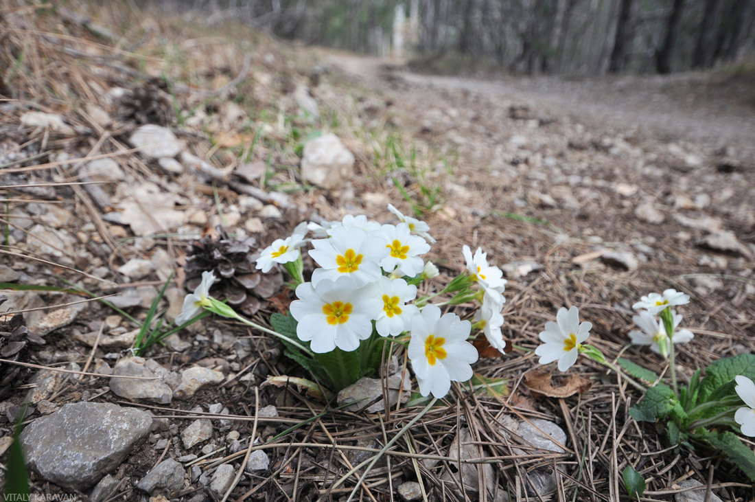 крымские цветы весна