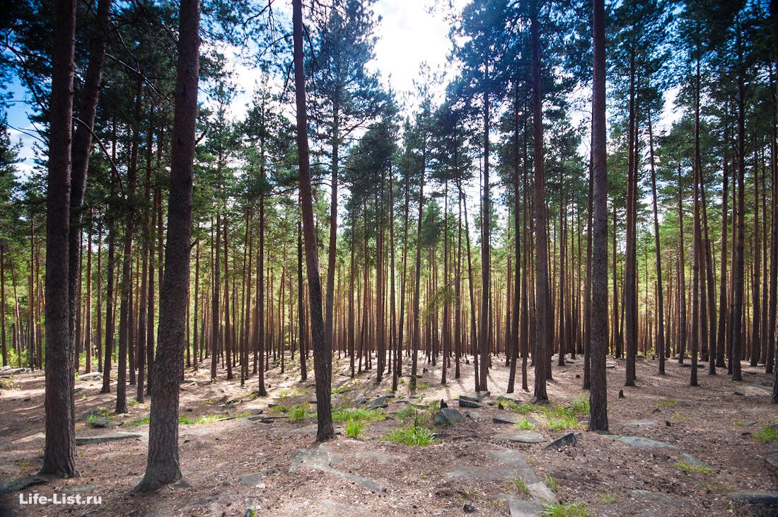 красивый лес на скалах Чертово городище фото Виталий Караван