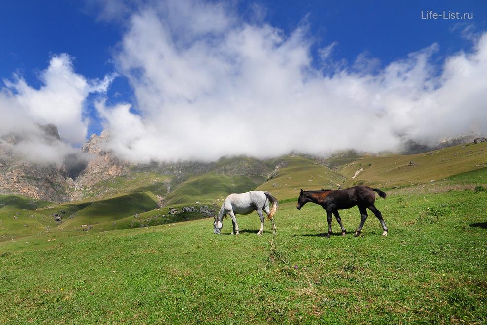 лошади на альпийских горах Ингушетии фото