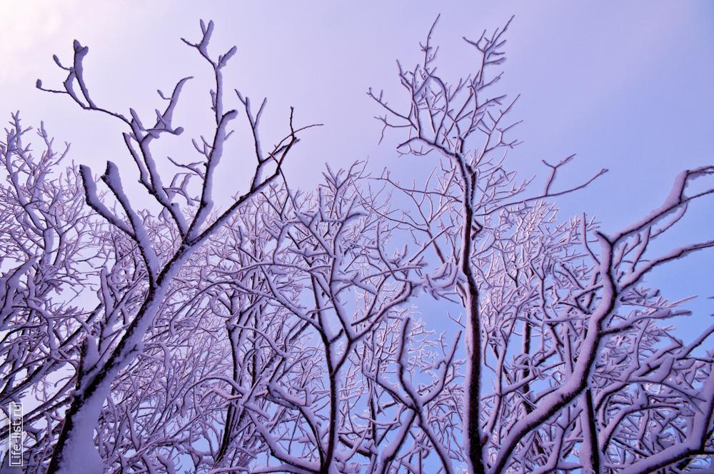 Фото Виталий Караван деревья в снегу на горе Качканар