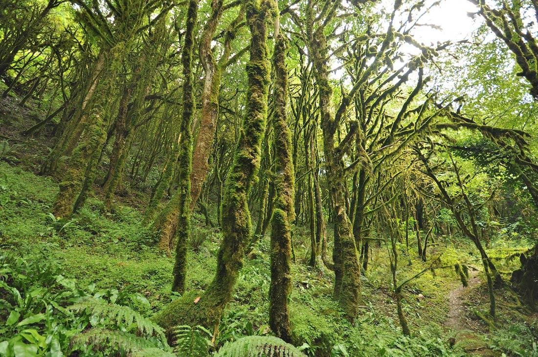 Красивая субтропическая растительность Абхазии Новый Афон