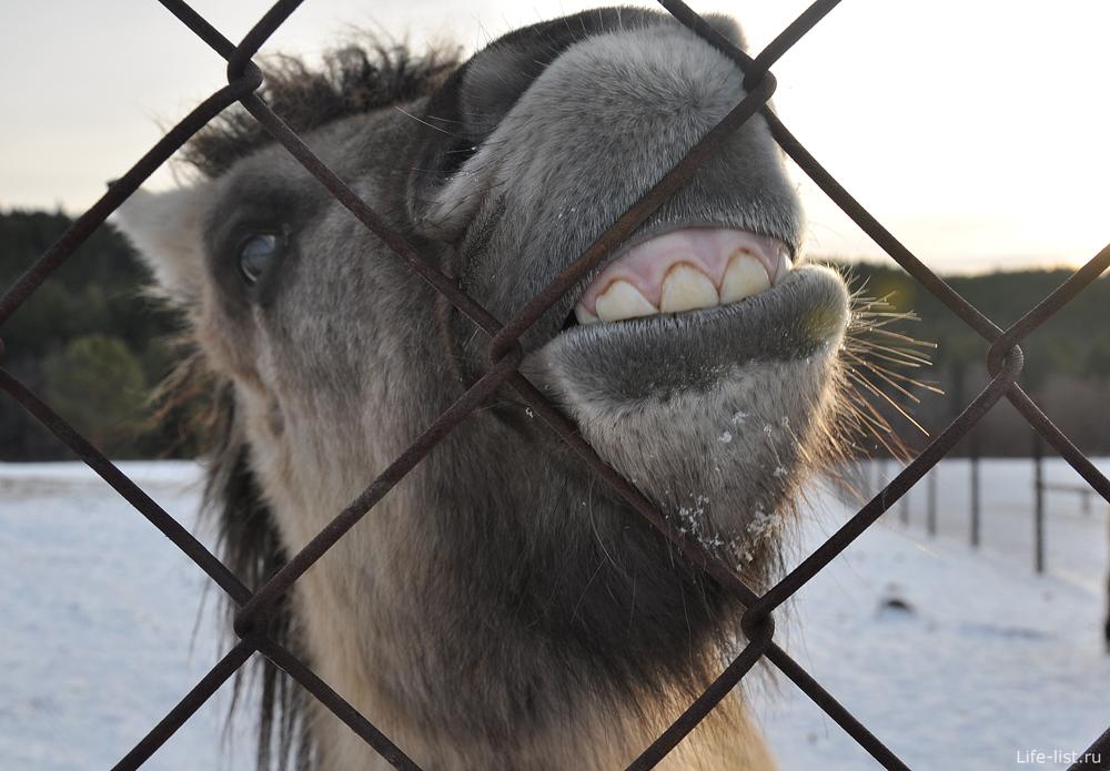 Якутская лошадь поселок Висим