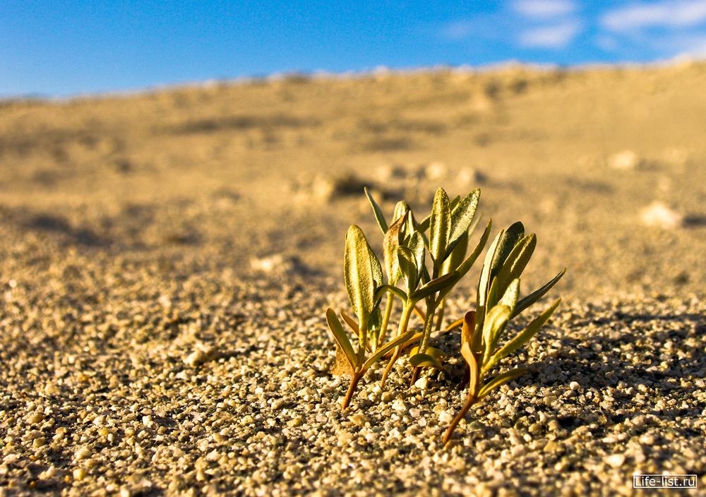 жизнь в песках