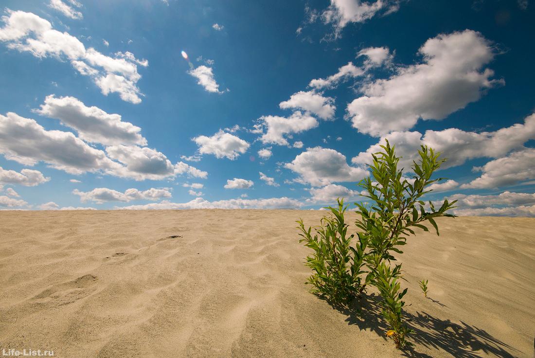 песочные барханы березовские пески город Березовский шахта