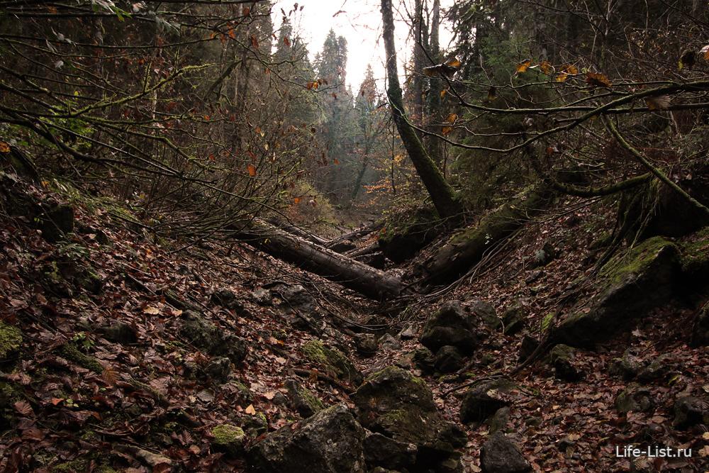 весенний лес в Абхазии тропа на малую Рицу
