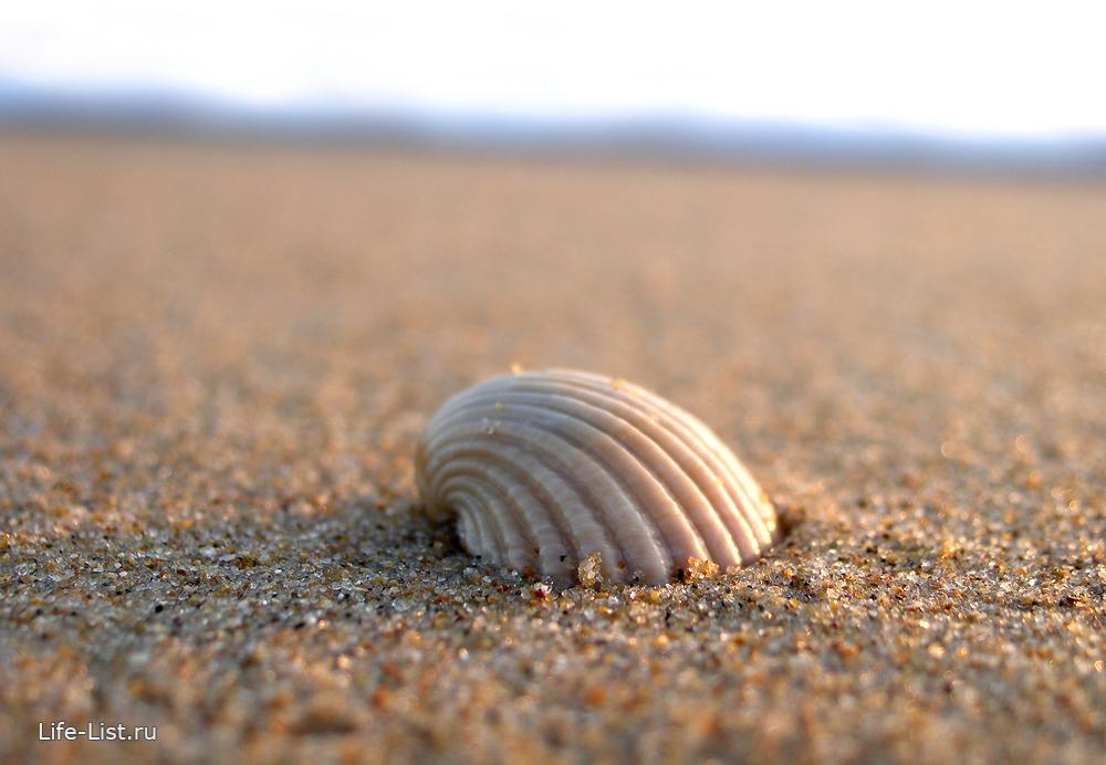 Ракушка фото море