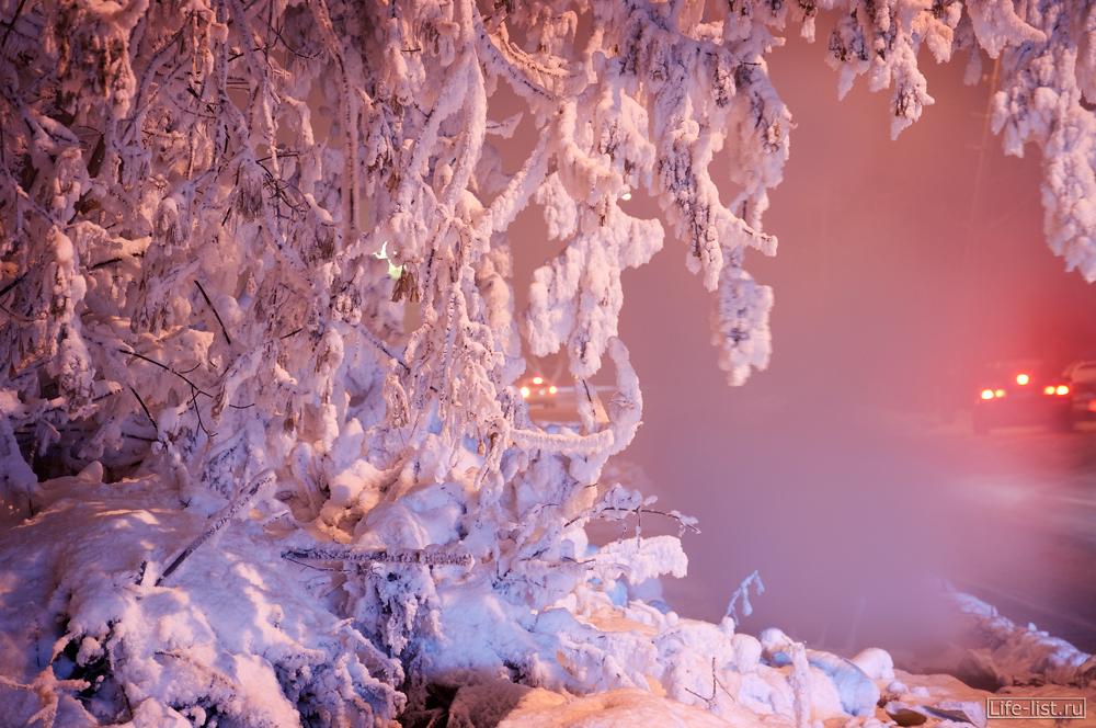 Зимнее дерево в Снегу фото Виталий Караван