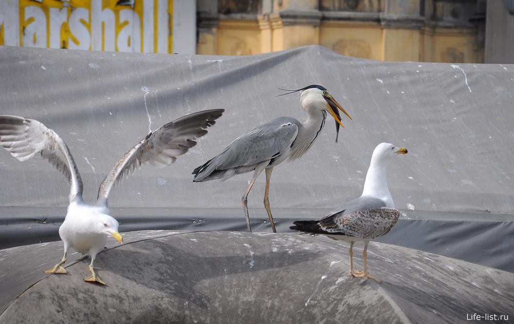 Чайки в Турции