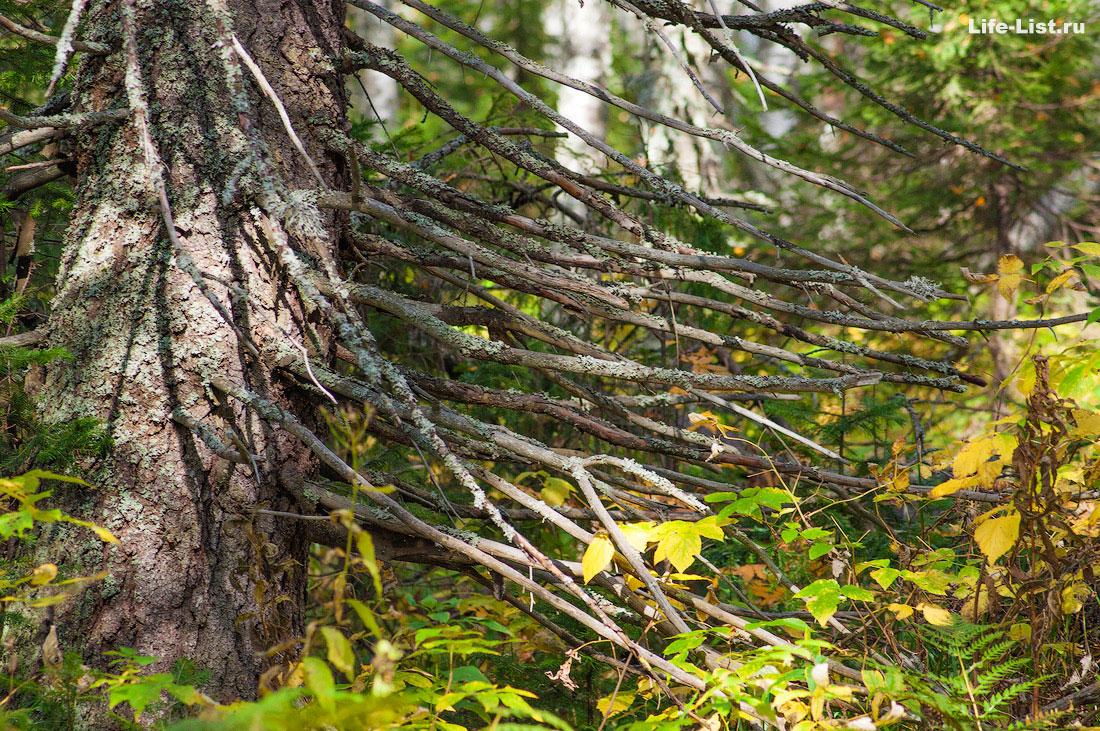 природа Таганай парк Южный Урал красивая природа