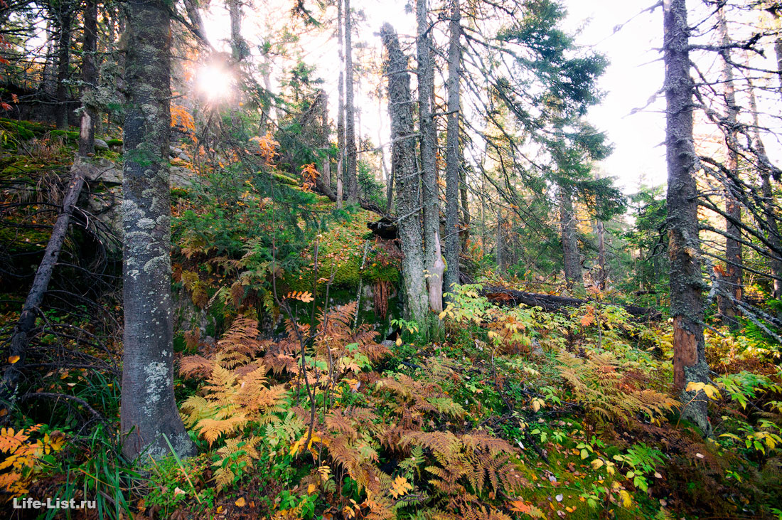 фото тайга Южный Урал парк Таганай