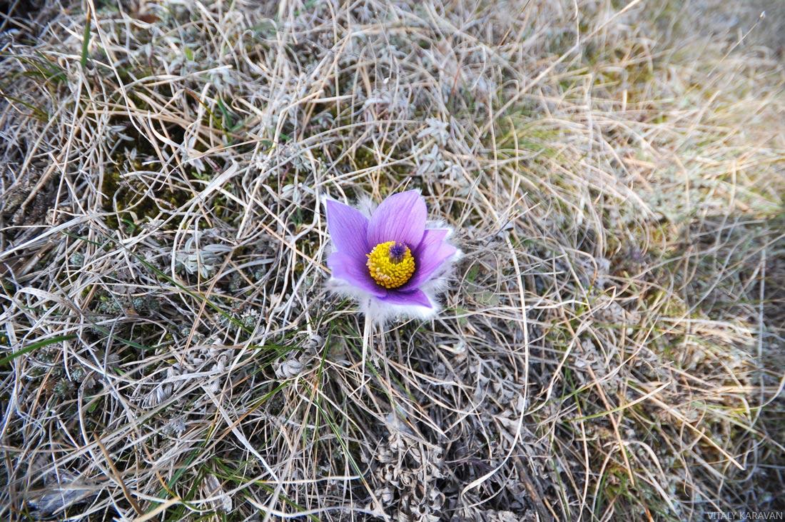 цветы крыма фотография