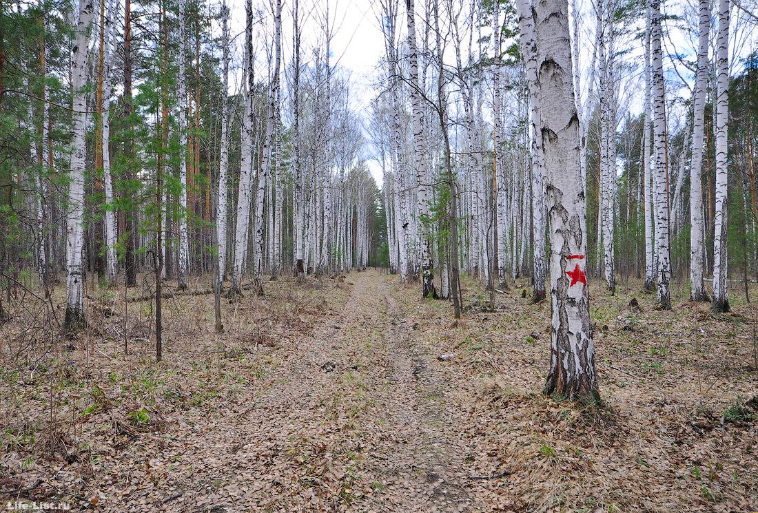 экологическая тропа Кузнецова шувакишский лесопарк Екатеринбург