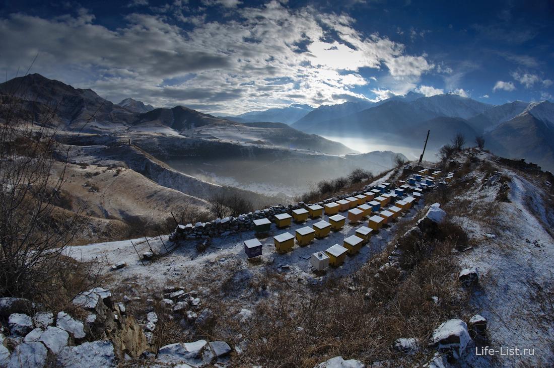 пасека в горах Ингушетии