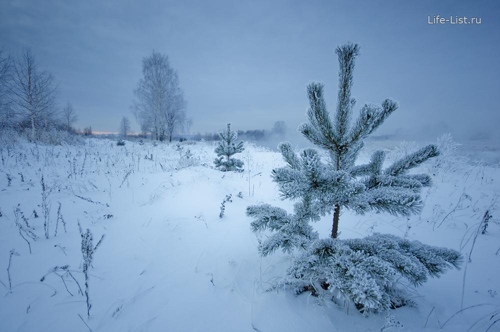 фото Виталий Караван елочка в лесу