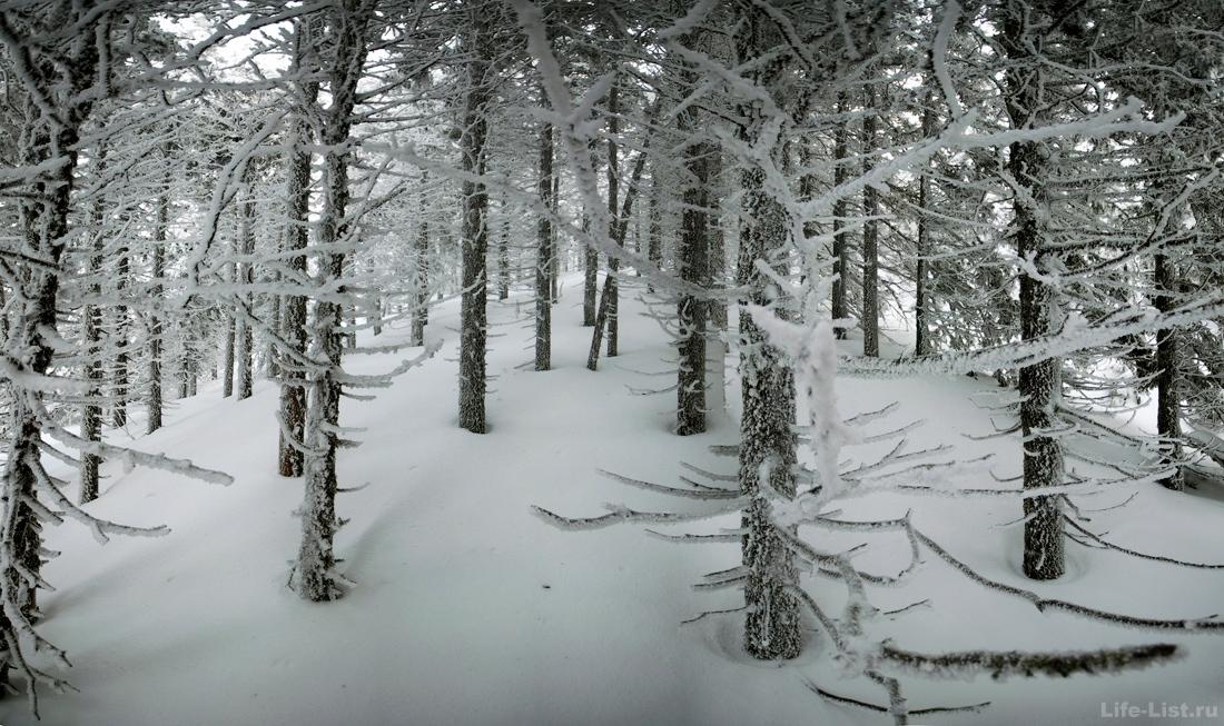 Природа на хребте Уреньга Южный Урал