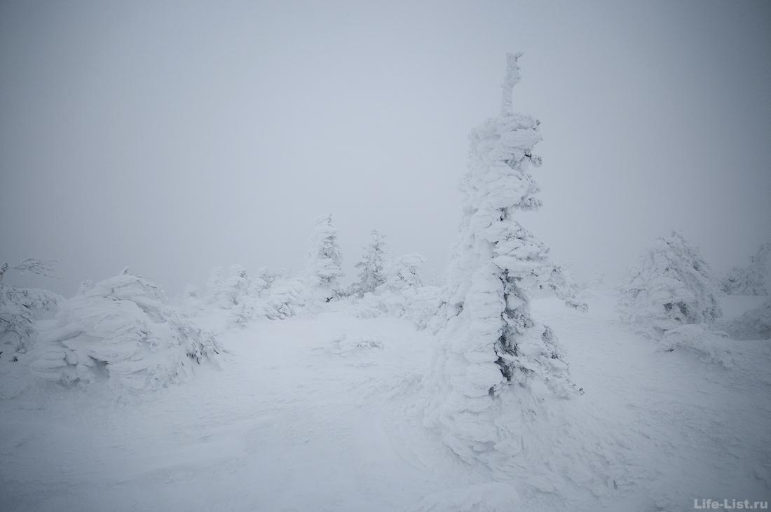 на первой сопке хребет Уреньга зимой