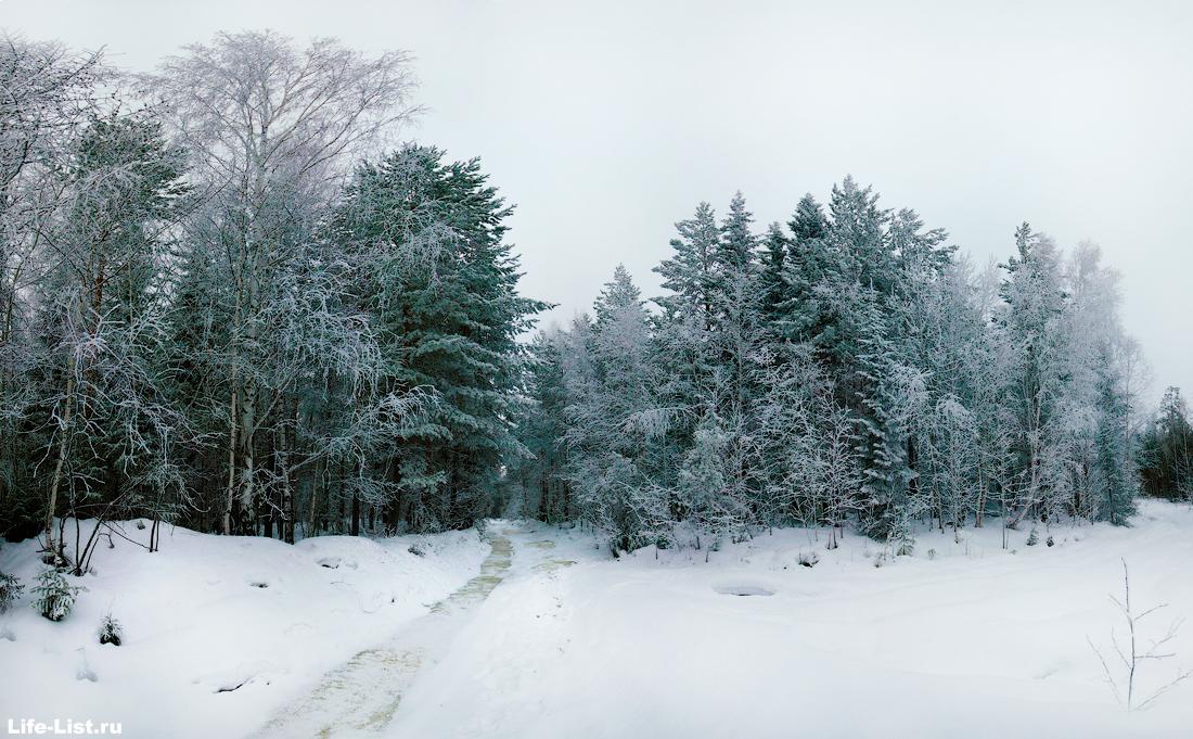 Уральский зимний лес фото Виталий Караван