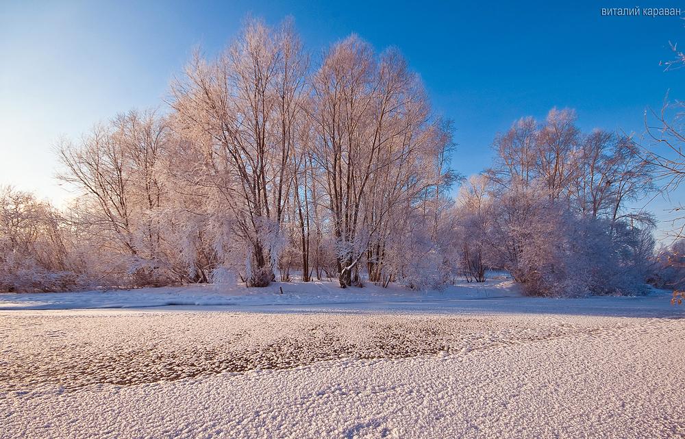 Заснеженные деревья фотографии