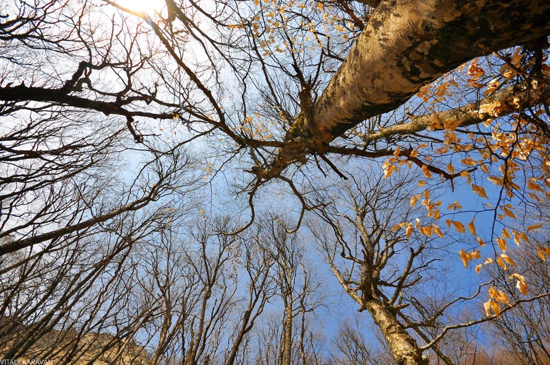 деревья растительность Крыма
