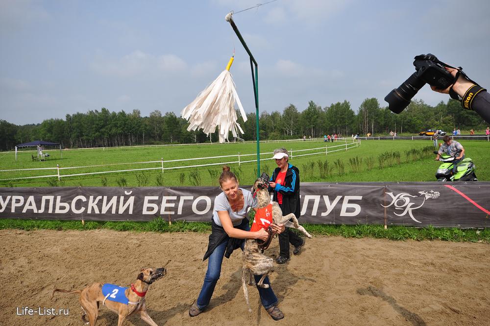 чемпионат по собачьим бегам по кругу за механическим зайцем фото
