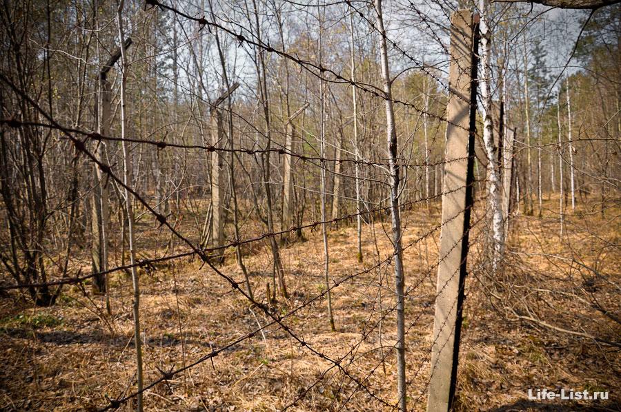 забор с колючей проволокой фото