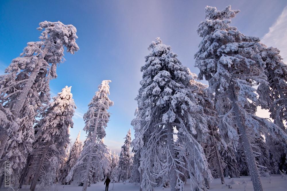 Заснеженный лес на горе Качканар