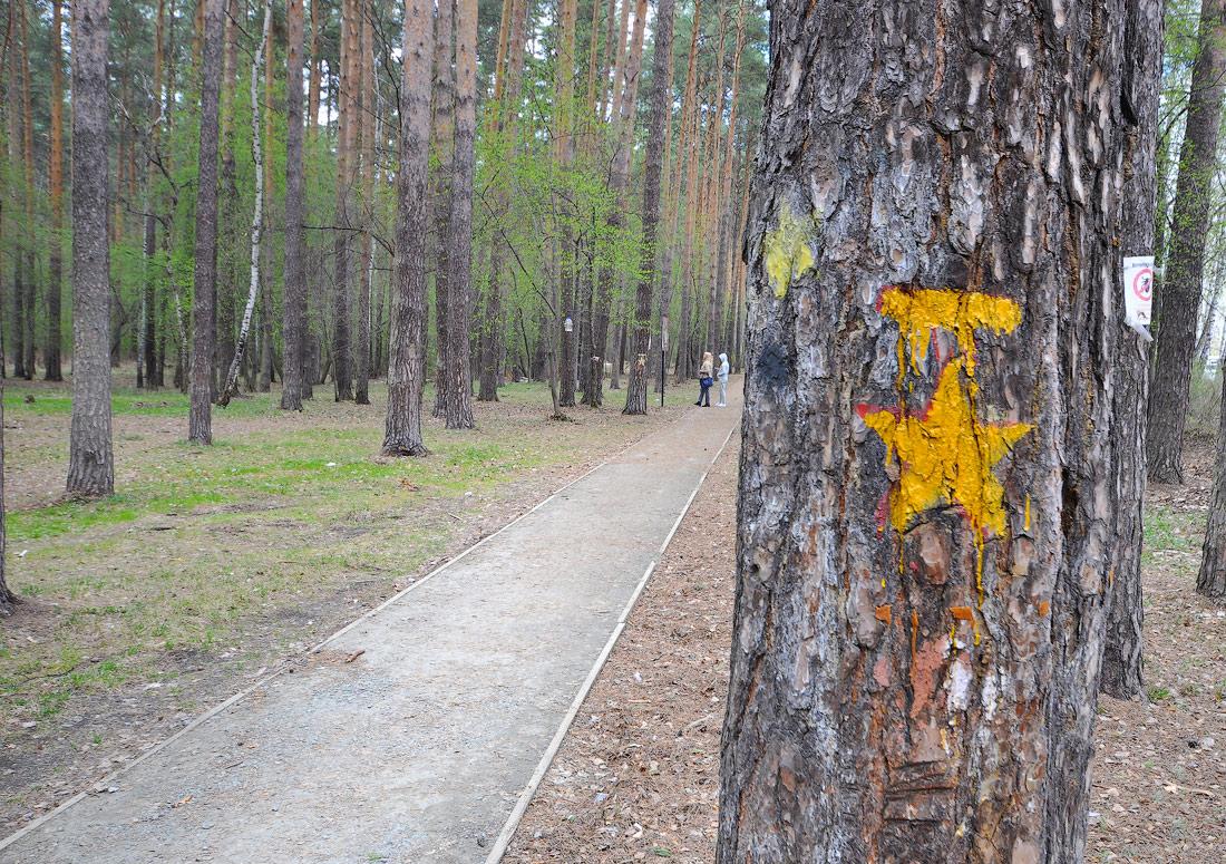 Разметка на деревьях пешеходный маршрут тропа Кузнецова