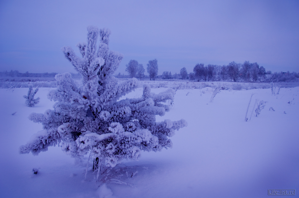 Красивые фотографии зимней природы Елка с инеем