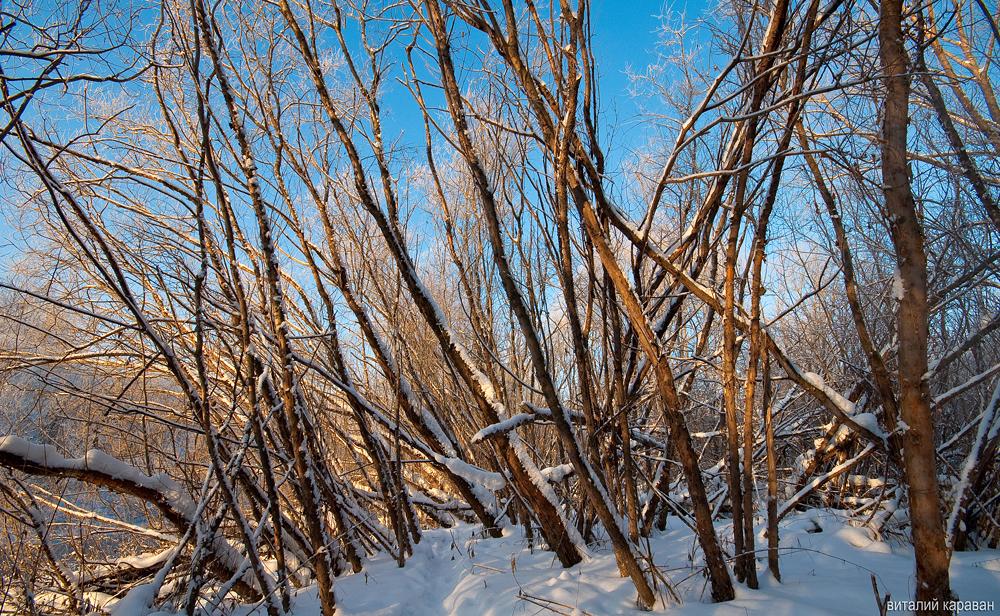 странный лес на урале зима